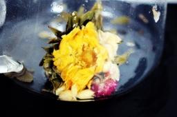 Golden Monkey Dragon Flowers (11)